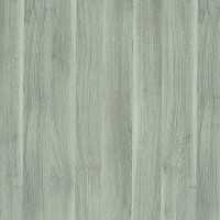 Silver Acacia R